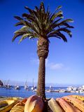 Palmträd med kajaker på grunden Royaltyfri Fotografi
