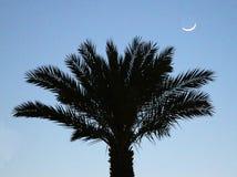 Palmträd med månen Royaltyfri Foto