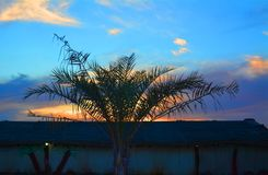 Palmträd med solnedgångbakgrund, Dubai UAE Arkivbilder
