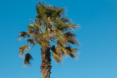 Palmträd mot den blåa himlen Arkivfoto