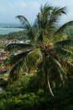 Palmträd mot den blåa himlen och havet arkivfoton