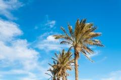 Palmträd mot den härliga tropiska ön för blå klar himmel fotografering för bildbyråer