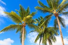 Palmträd mot en blå himmel royaltyfri fotografi