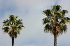 Palmträd mot en delvis molnig himmel arkivbild