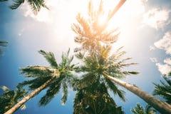 Palmträd mot för effektnatur för blå himmel tonad sikt för design för lopp för ferie för bakgrund för landskap tropisk upp Arkivfoto