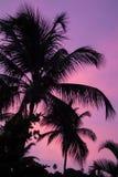 Palmträd mot himlen som är upplyst vid solnedgången Royaltyfria Bilder