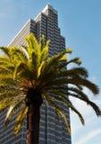 Palmträd mot himmelskrapan Fotografering för Bildbyråer