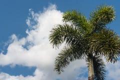Palmträd mot molnig himmel Arkivbilder