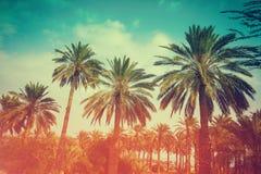 Palmträd mot skyen Royaltyfria Foton