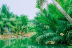 Palmträd nära floden royaltyfria foton