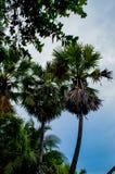 Palmträd och aftonhimlen royaltyfria bilder