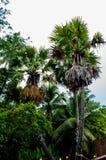 Palmträd och aftonhimlen royaltyfri fotografi