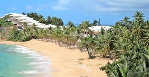 Palmträd och andelslägenheter längs stranden Royaltyfri Foto