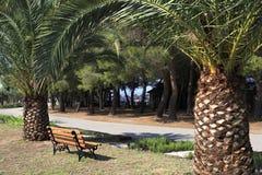 Palmträd och bänk Arkivbilder