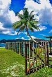 Palmträd- och bambuport Arkivbilder
