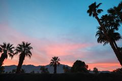 Palmträd och berg Royaltyfri Bild