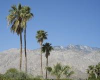 Palmträd och berg arkivfoto