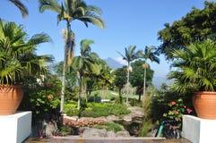 Palmträd och berget Arkivbilder