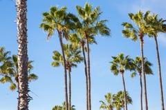 Palmträd och blå himmel Arkivfoton