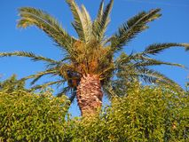 Palmträd och blå himmel för frikänd Royaltyfria Foton