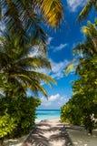 Palmträd och blå lagoob med blå himmel och moln arkivfoton