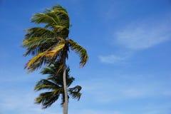 Palmträd och blåa himlar Royaltyfri Foto