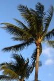 Palmträd och blåttsky Arkivfoton
