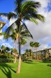 Palmträd och condos, Maui Arkivfoto