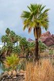Palmträd och dammet på Papago parkerar Phoenix Arizona Royaltyfri Foto