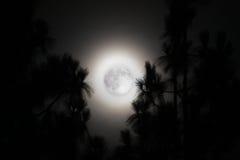 Palmträd och en disig fullmåne i Kalifornien Arkivfoton