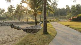 Palmträd och en hängmatta Fotografering för Bildbyråer