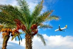Palmträd och ett flygplan Arkivfoto