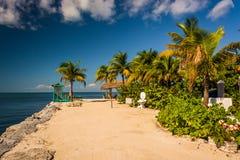 Palmträd och golfen av Mexico i maraton, Florida Arkivbild