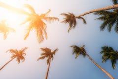 Palmträd och gul sol i en himmel Royaltyfri Fotografi