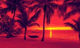 Palmträd och hängmatta på den tropiska stranden Arkivbild