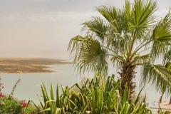 Palmträd och i bakgrunden vattnet av det döda havet israel royaltyfri foto