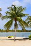 Palmträd och kajak på den karibiska stranden Arkivfoton