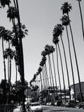 Palmträd och kranar Arkivbilder