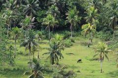 Palmträd och lantgårdfält i Filippinerna Arkivfoton