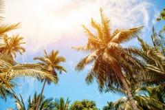 Palmträd och ljus sol på bakgrund för blå himmel Royaltyfria Bilder