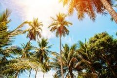 Palmträd och ljus sol på bakgrund för blå himmel Arkivfoto