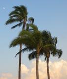 Palmträd och måne i himlen i Hawaii, USA Royaltyfri Fotografi
