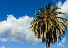 Palmträd och moln på en blåsig eftermiddag Arkivbild