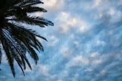 Palmträd och molnig himmel Arkivbild