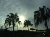 Palmträd och molnigt Arkivfoton