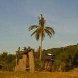 Palmträd och moped royaltyfri fotografi