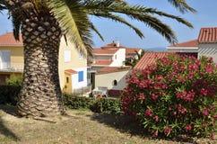 Palmträd och oleander på den Sanktt Cyprien byn in Royaltyfri Fotografi