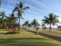 Palmträd och rött sunbed i en semesterort i Bali Indonesien Arkivfoton