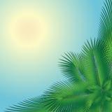 Palmträd och solen Arkivbild