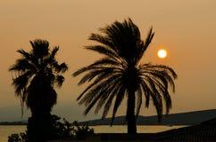Palmträd och solnedgång över det Aegean havet Royaltyfria Bilder